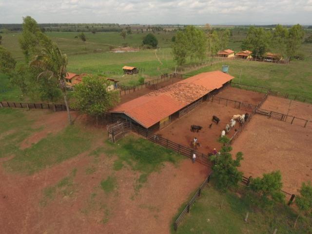 Fazenda 5.900 há (1.219 alq) pronta para produção Bovina norte do Tocantins