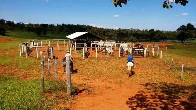 60 Alq. Troca Por Faz. Tocantins Mato Grosso Ou Goias + Acima 400 Alq - Foto 12