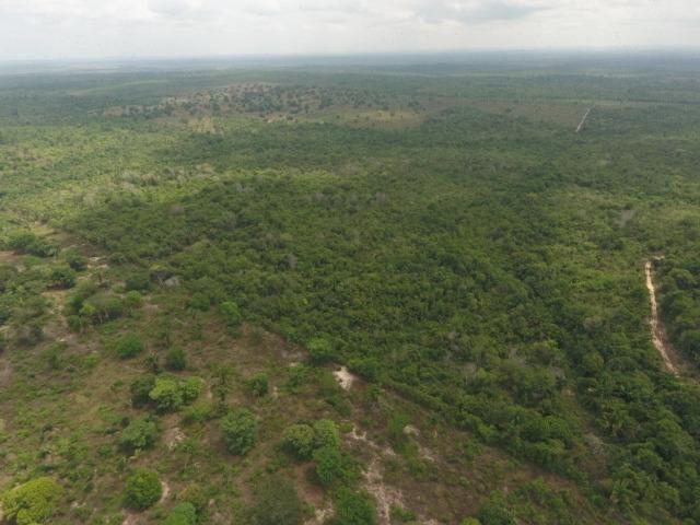 Fazenda 5.900 há (1.219 alq) pronta para produção Bovina norte do Tocantins - Foto 4