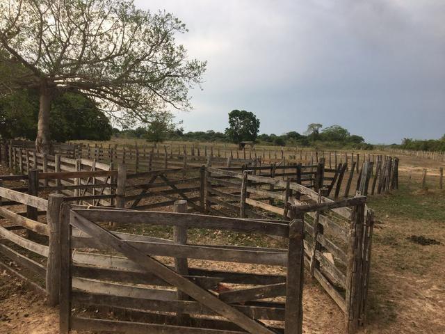 Fazenda 9.715 hectares no pantanal de Poconé MT - Foto 16