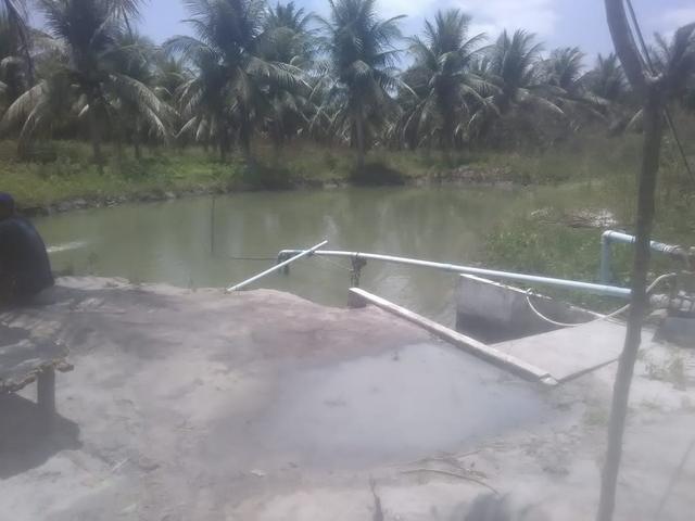 16 Ha irrigado Baixa Acaraú próximo do Marco - Foto 7