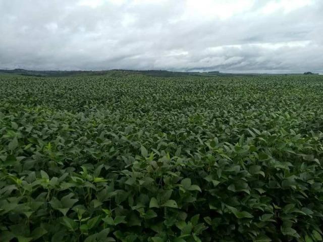 60 Alq. Troca Por Faz. Tocantins Mato Grosso Ou Goias + Acima 400 Alq - Foto 3