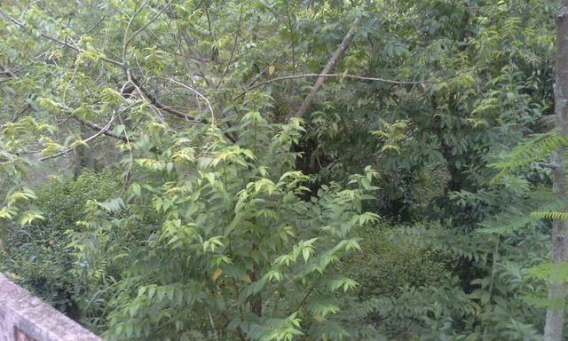Vendo Terreno 12x30 em Itaboraí - aceito proposta - Foto 13