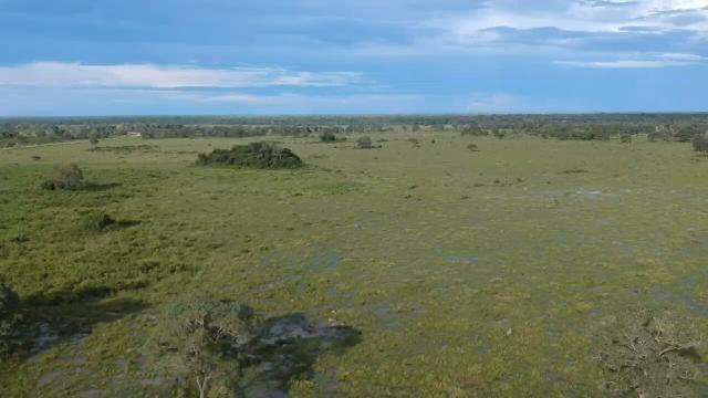 Fazenda 9.715 hectares no pantanal de Poconé MT - Foto 2
