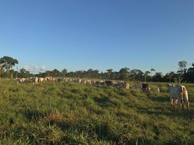 Fazenda no Acre - Foto 10