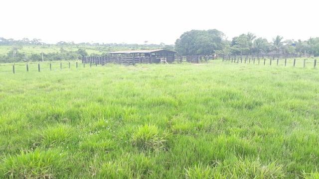 Fazenda no Acre - Foto 5