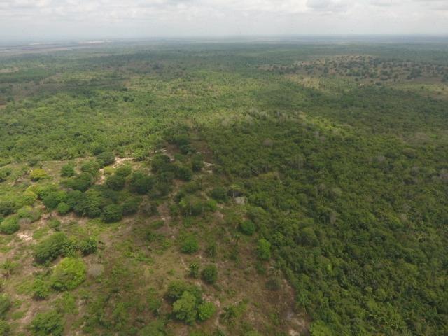 Fazenda 5.900 há (1.219 alq) pronta para produção Bovina norte do Tocantins - Foto 3