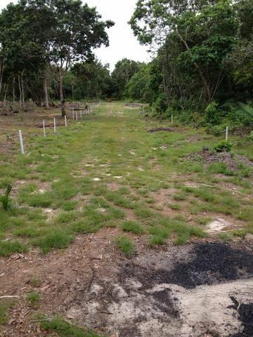 Terrenos em ponta de pedras . com igarapé