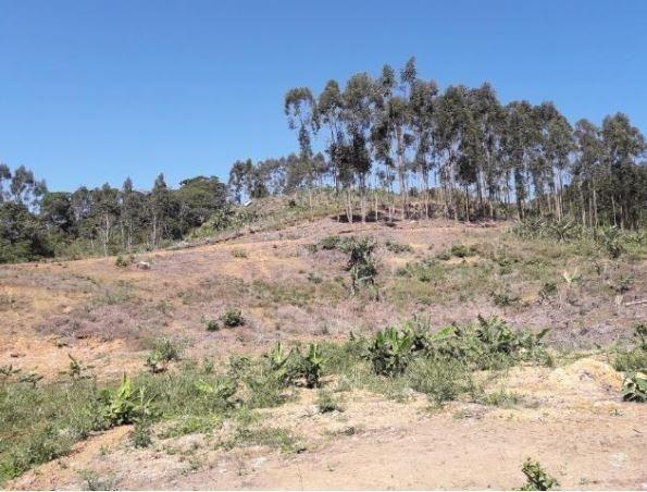 Sítio Localizado na Estrada Geral, Alto Braço Baú, 45 mil m² - Foto 5