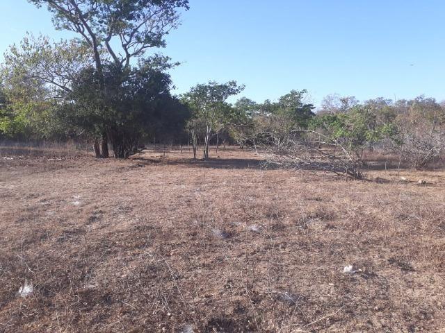 Chácara 04 hectares - Flores de Goiás - Foto 20