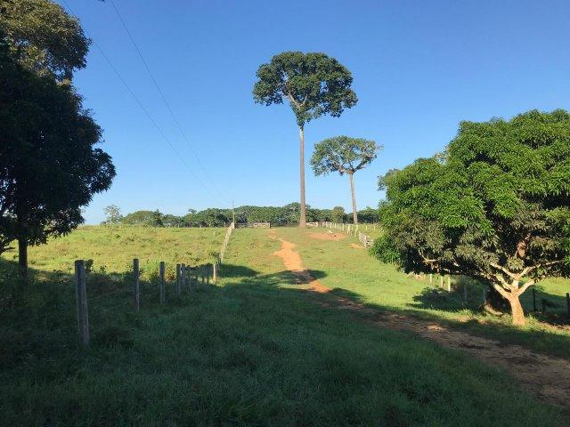 Fazenda no Acre - Foto 8