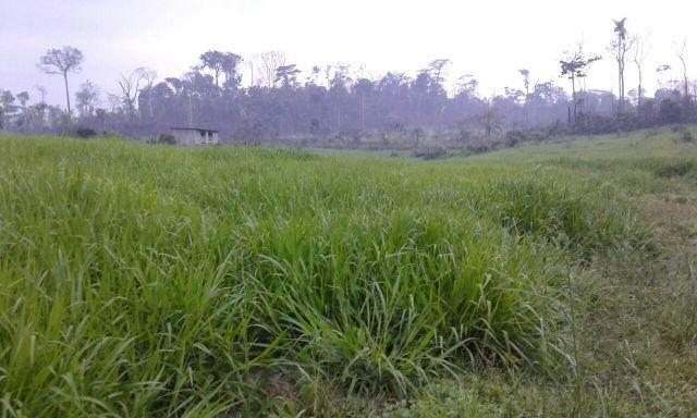 Fazenda Novo Progresso - 4.260.091 m2