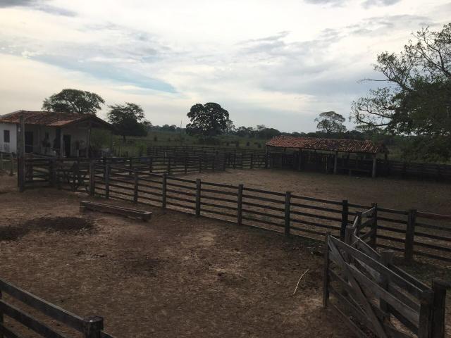Fazenda 9.715 hectares no pantanal de Poconé MT - Foto 17