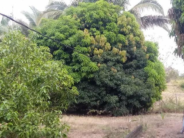 Sítio serra são vicente - Foto 7