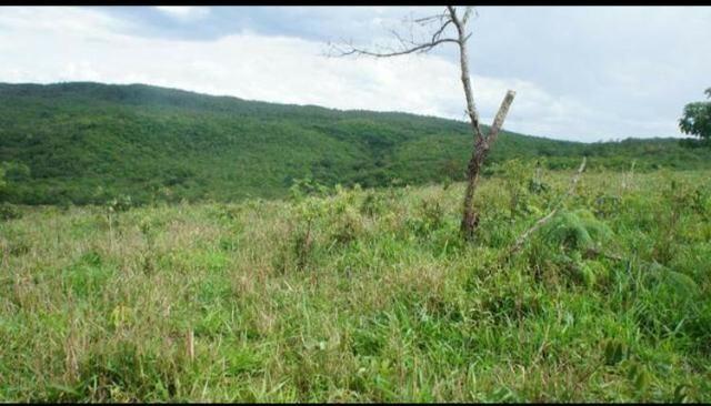 Fazenda 225 km de Goiânia município de Ipameri - Foto 9