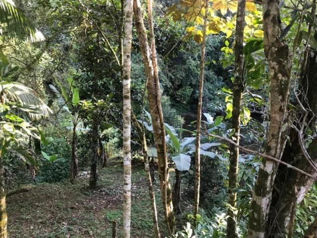 Sítio em Paraty a 8 km de Trindade- 10.000 m2 - Foto 5