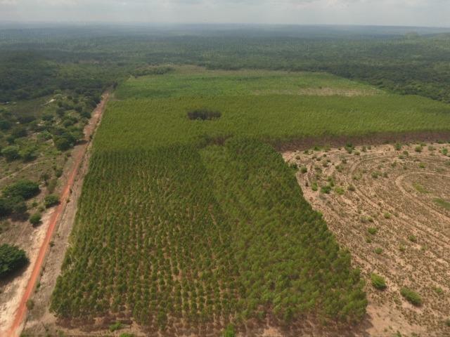 Fazenda 5.900 há (1.219 alq) pronta para produção Bovina norte do Tocantins - Foto 6