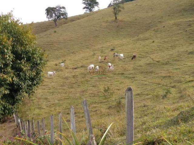 Linda Fazenda no Vale do Paraiba, porteira fechada - Cód 1505 - Foto 5