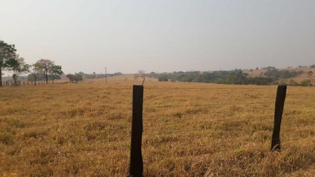 Fazenda no município de Edeia - GO - Foto 4