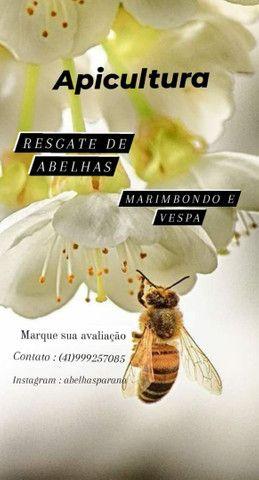 Abelha Paraná - Foto 3
