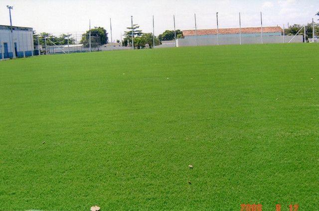 Plantamos grama  - Foto 3