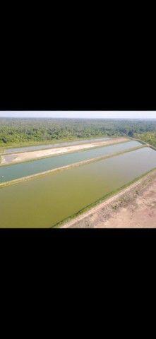 Sentido Amazonas