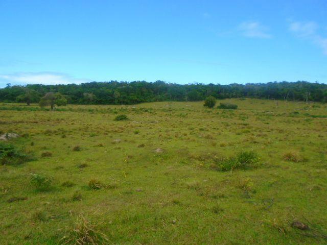 Código 223 Fazenda localizada no Retiro, próxima a RJ 106, Maricá-RJ - Foto 3