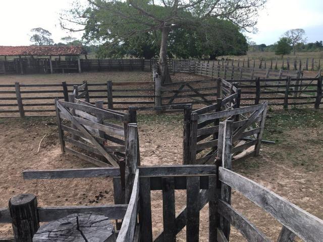 Fazenda 9.715 hectares no pantanal de Poconé MT - Foto 13