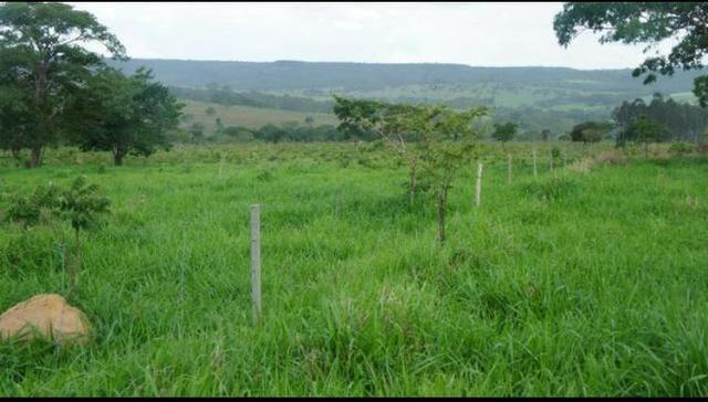 Fazenda 225 km de Goiânia município de Ipameri - Foto 6