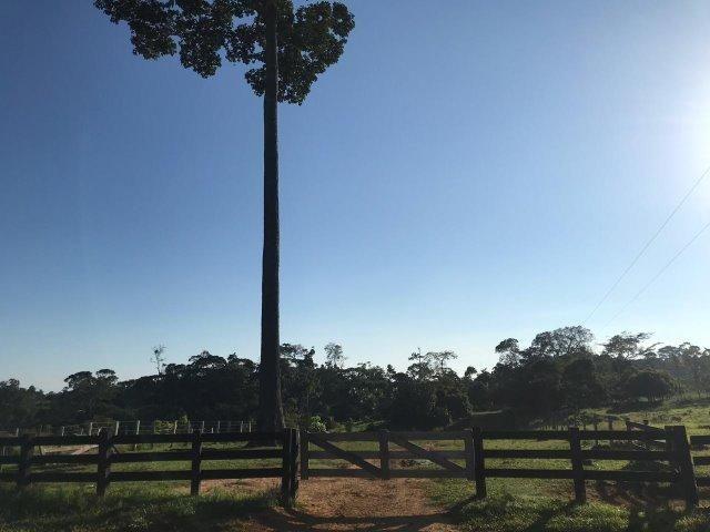 Fazenda no Acre - Foto 6
