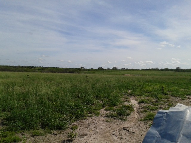 Em ceara mirim fazenda com 36 há,casa,curral,poço,pasto,pocilga,barreiro - Foto 2
