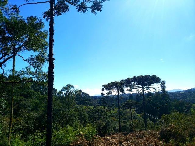 Belo Sítio com 30 hectares as Margens do Rio Canoas, em Rio Rufino - Foto 4