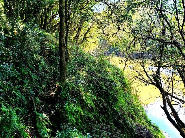 Belo Sítio com 30 hectares as Margens do Rio Canoas, em Rio Rufino - Foto 17