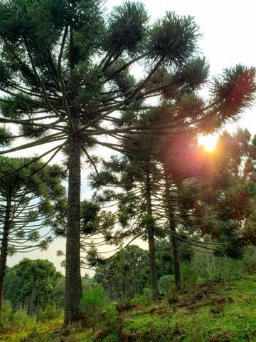 Sítio 14 hectares em Urupema com Cachoeira - Foto 9
