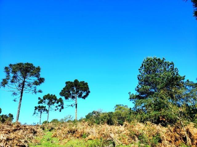 Belo Sítio com 30 hectares as Margens do Rio Canoas, em Rio Rufino - Foto 10