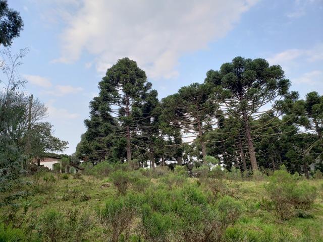 Sítio 14 hectares em Urupema com Cachoeira - Foto 3