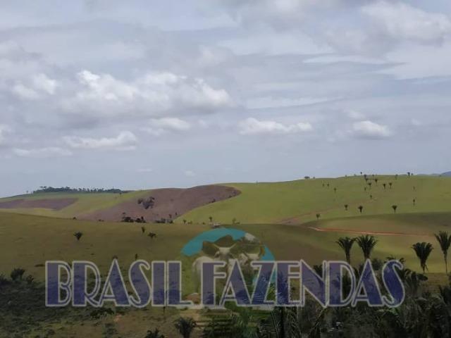 Fazenda em Itamaraju. Jucuruçu