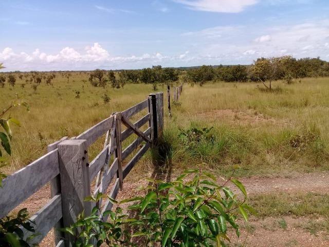 Fazenda de 840 alqs. dupla aptidão Proxima de Dois Irmãos - Foto 5