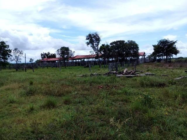 Fazenda de 840 alqs. dupla aptidão Proxima de Dois Irmãos - Foto 15