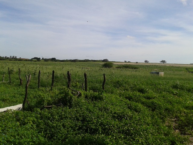 Em ceara mirim fazenda com 36 há,casa,curral,poço,pasto,pocilga,barreiro - Foto 5
