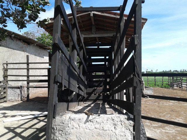 Em ceara mirim fazenda com 36 há,casa,curral,poço,pasto,pocilga,barreiro - Foto 9