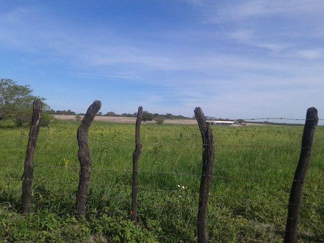 Em ceara mirim fazenda com 36 há,casa,curral,poço,pasto,pocilga,barreiro - Foto 3