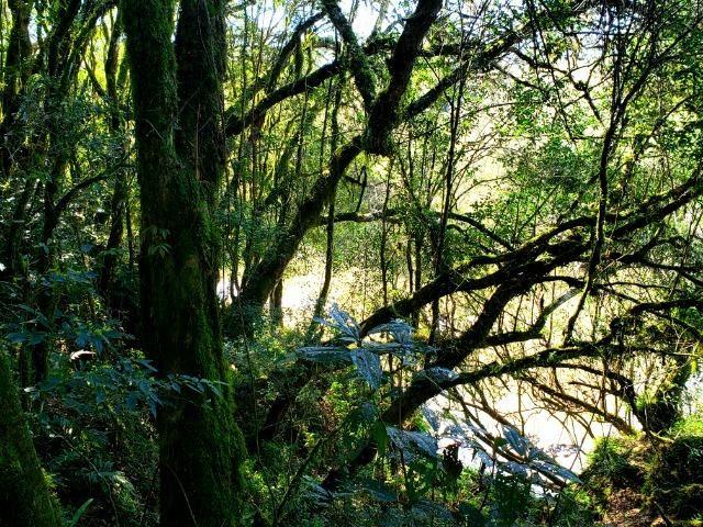 Belo Sítio com 30 hectares as Margens do Rio Canoas, em Rio Rufino - Foto 14