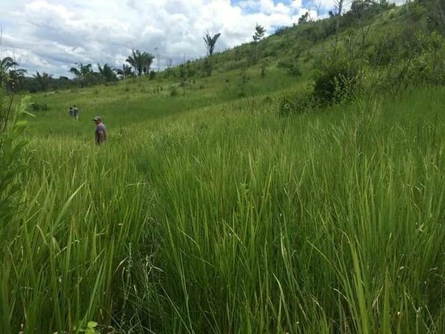 Fazenda em Governador Nunes Freire - Foto 5