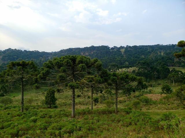 Sítio 14 hectares em Urupema com Cachoeira - Foto 8