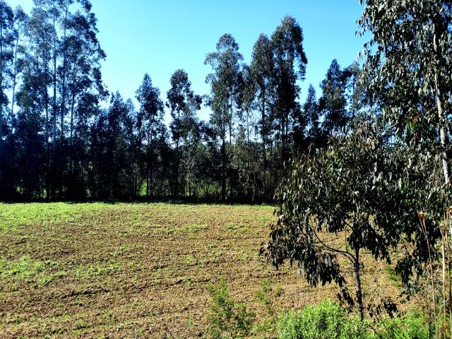Belo Sítio com 30 hectares as Margens do Rio Canoas, em Rio Rufino - Foto 16