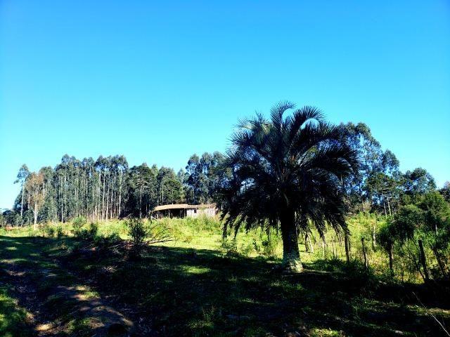 Belo Sítio com 30 hectares as Margens do Rio Canoas, em Rio Rufino - Foto 3