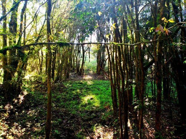 Belo Sítio com 30 hectares as Margens do Rio Canoas, em Rio Rufino - Foto 15
