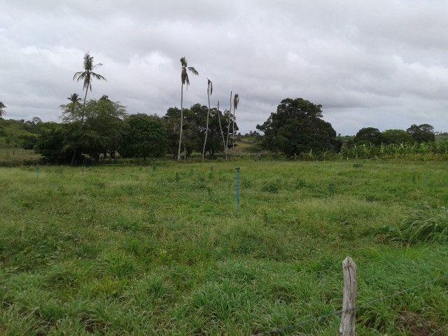 Fazenda em monte alegre, 30 há. duas casas, poço, curral, rio, galpão - Foto 6