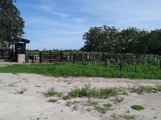 Em ceara mirim fazenda com 36 há,casa,curral,poço,pasto,pocilga,barreiro - Foto 10